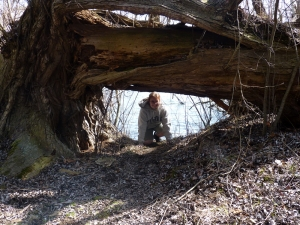 Me under a giant fallen, but yet living, willow tree!